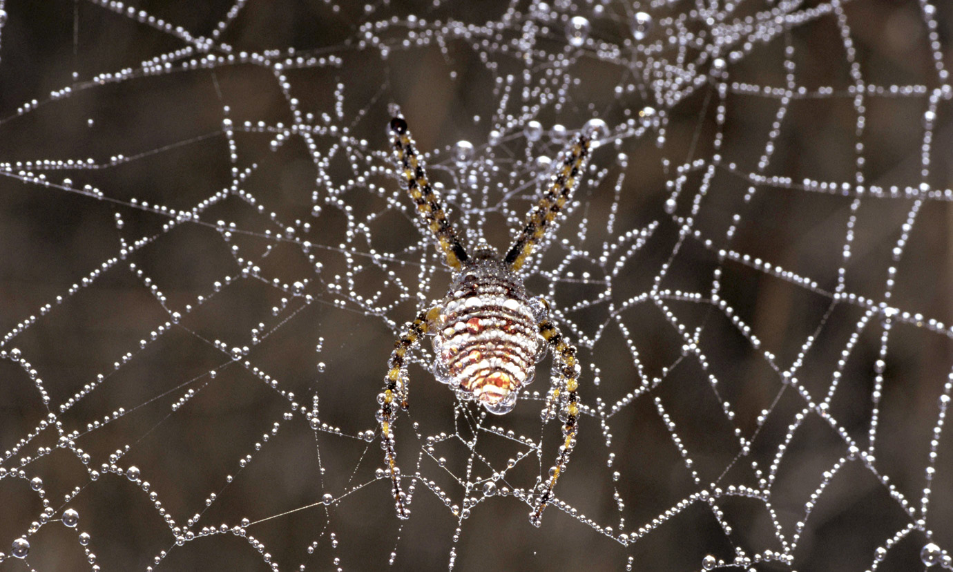 A spider in a web glistening with dew.