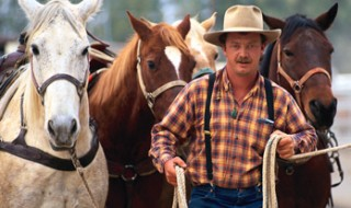 A cowboy walking in front of a pack of horses and leading them by their reins.
