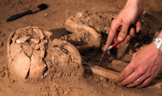 A close-up of an archaeologist's hands using tools to uncover an ancient skeleton buried in dirt.