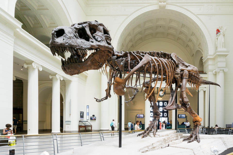a T Rex skeleton on display in a museum