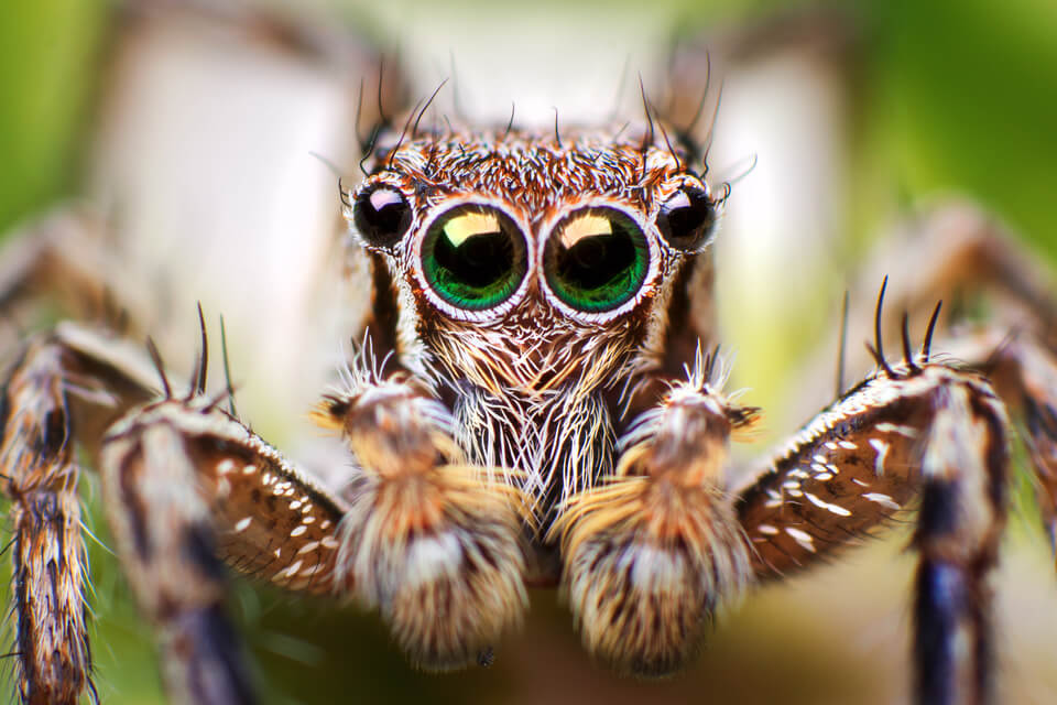 close up view of a jumping spider