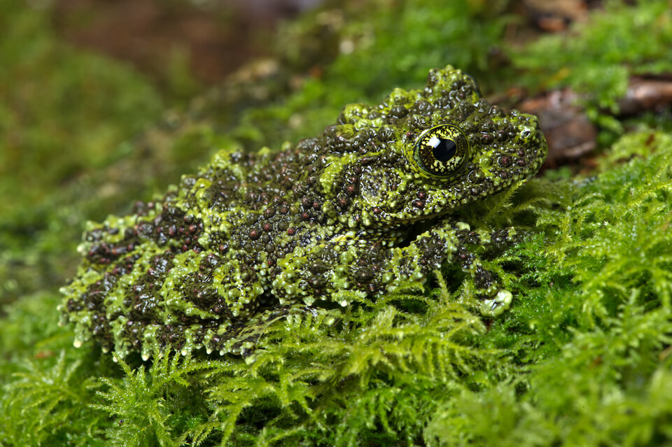 a green frog camouflaged by moss