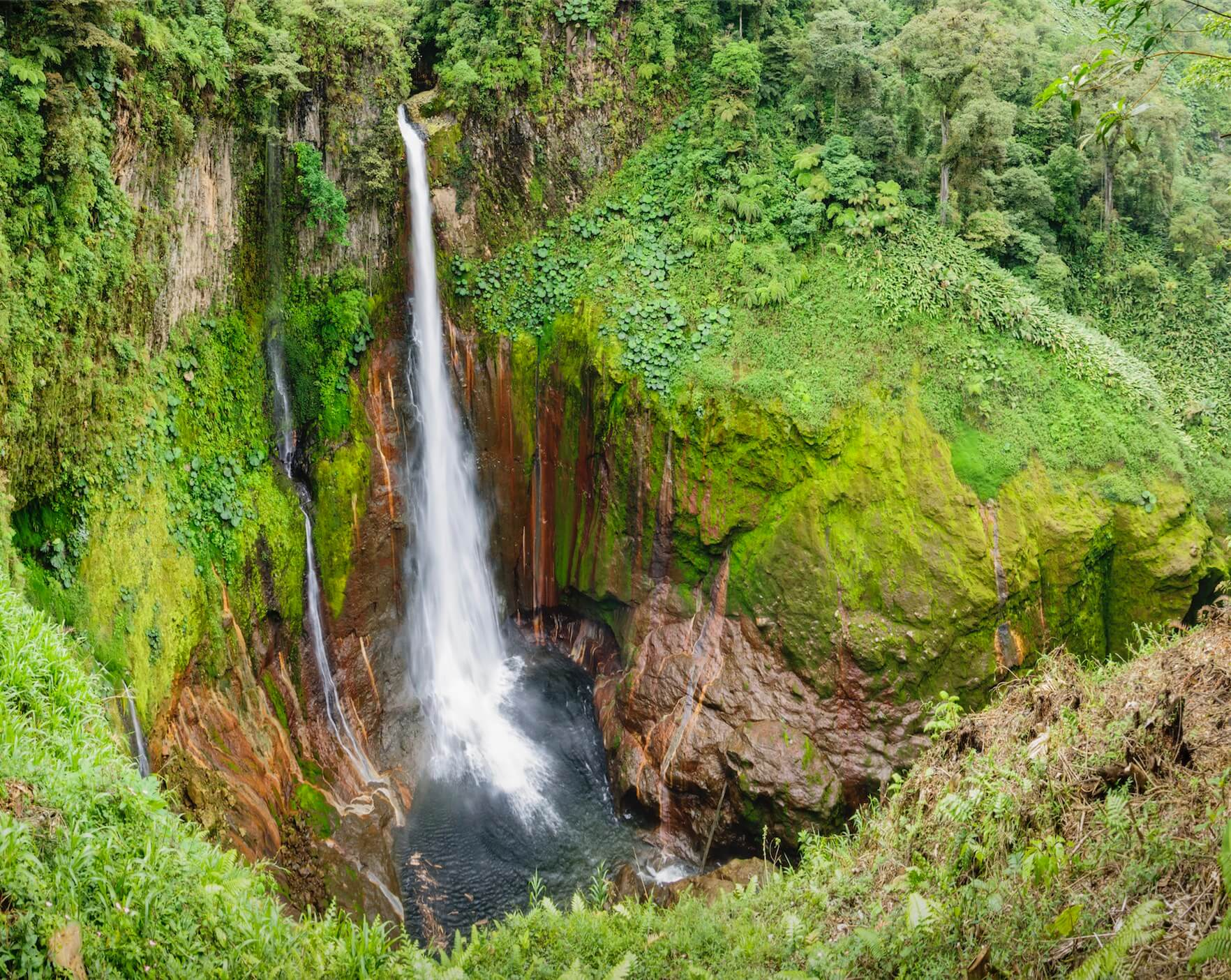 A waterfall flows in a tropical rain forest.