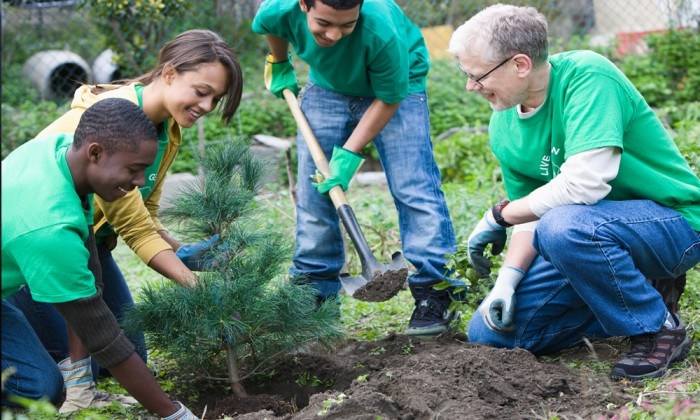 a group of volunteers plants a tree
