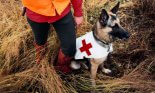 Search and rescue worker and dog