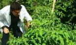 Researcher examining growing plants