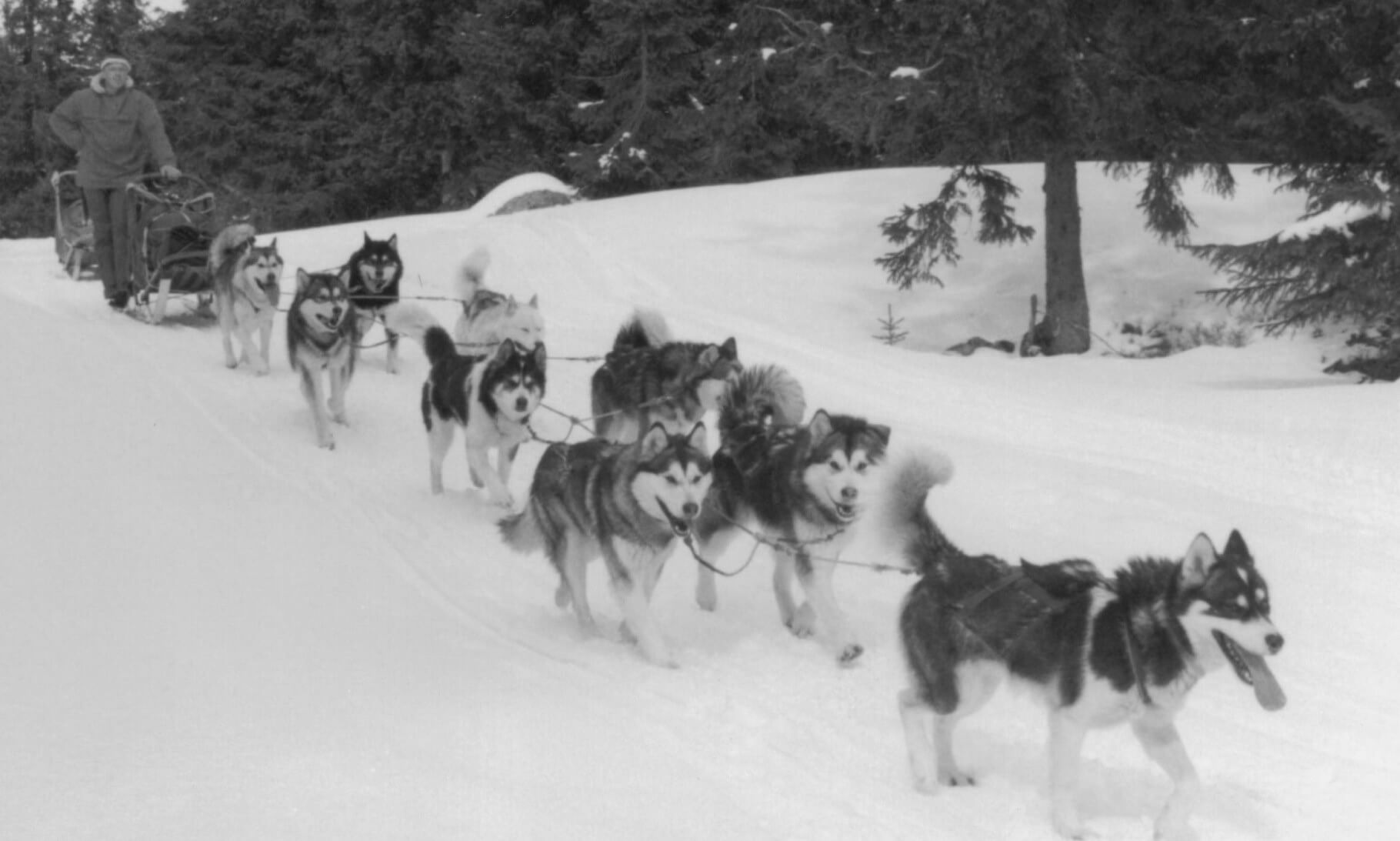 Husky dog sled team going through the snow in Norway