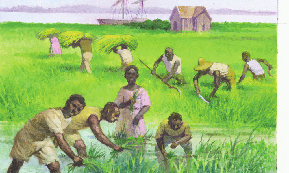 Slaves working in rice fields