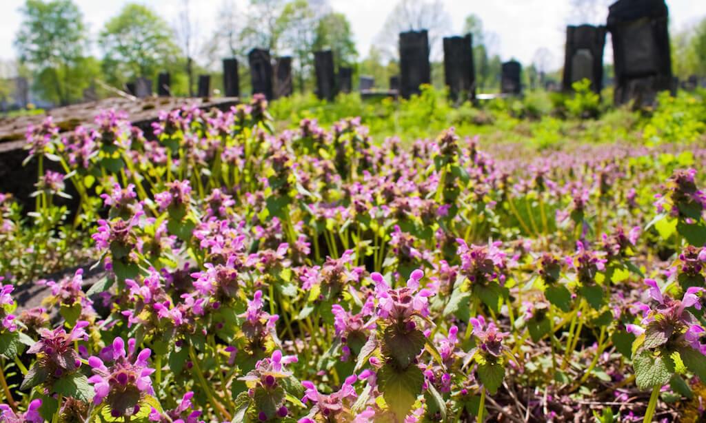Jewish cemetery in Lodz, Poland