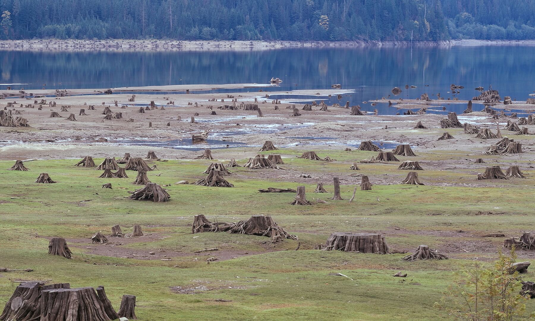 The stumps of many felled trees alongside a dammed river in North America