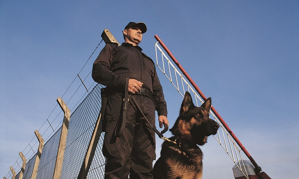 Security guard with a guard dog standing in front of a fence