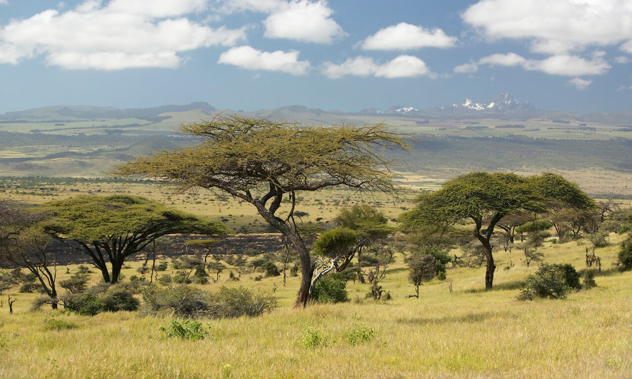 Acacia trees on savannah near Mount Kenya, Lewa Conservancy, Kenya