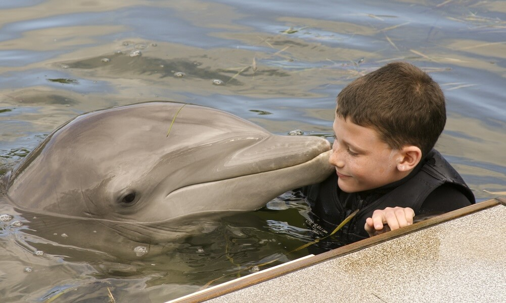 Young boy (13 years old) interacting with a bottle-nose dolphin