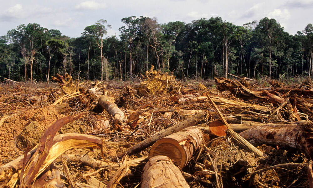Deforestation scene in the Amazon