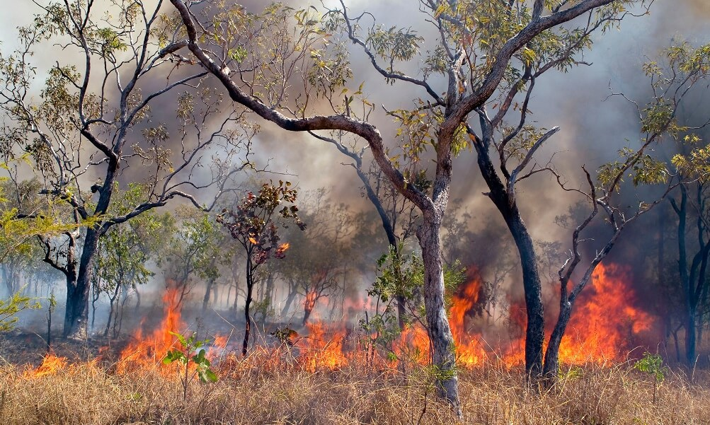 Bush fire, forest fire in Western Australia