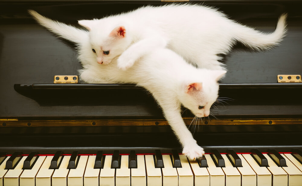 Two white kittens on piano