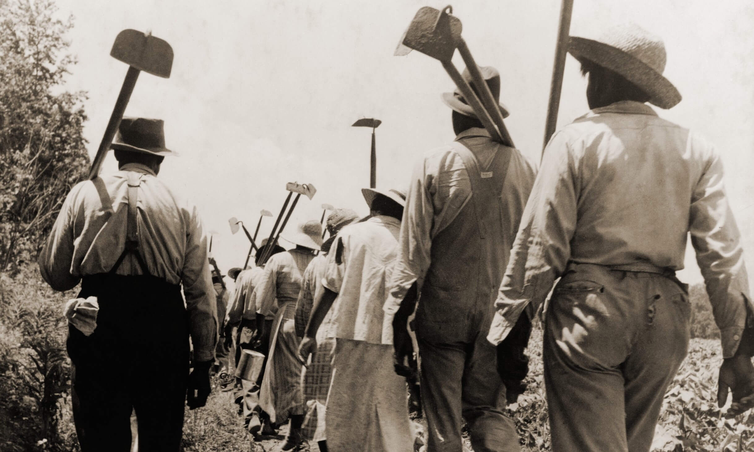 Workers on cotton farm