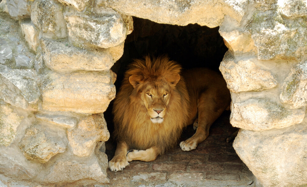 lion lying in a cave