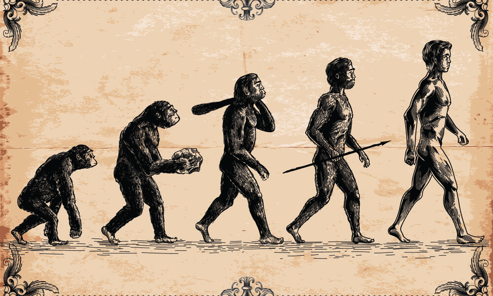 Graphic showing human evolution from primates--the early human ancestors are shown carrying implements (a rock, a club, and a spear)