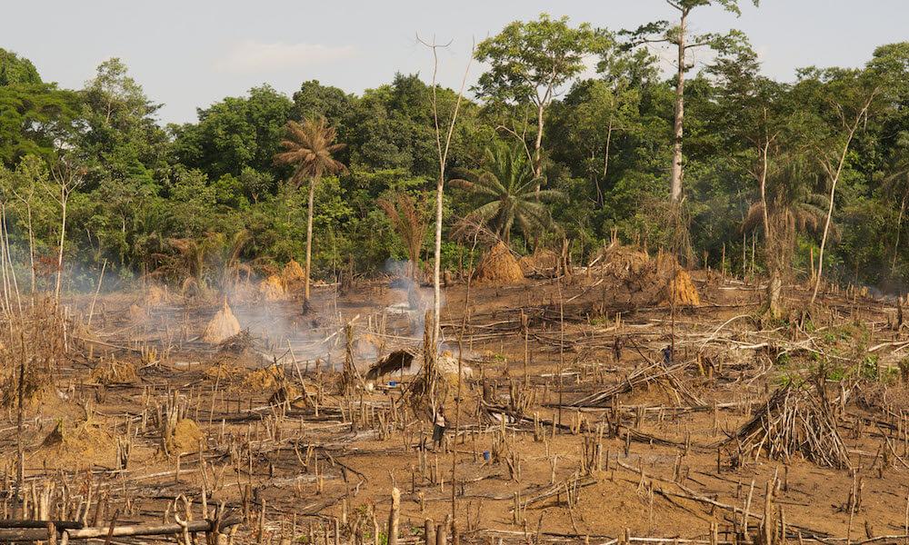 Slash-and-burn deforestation in Liberia