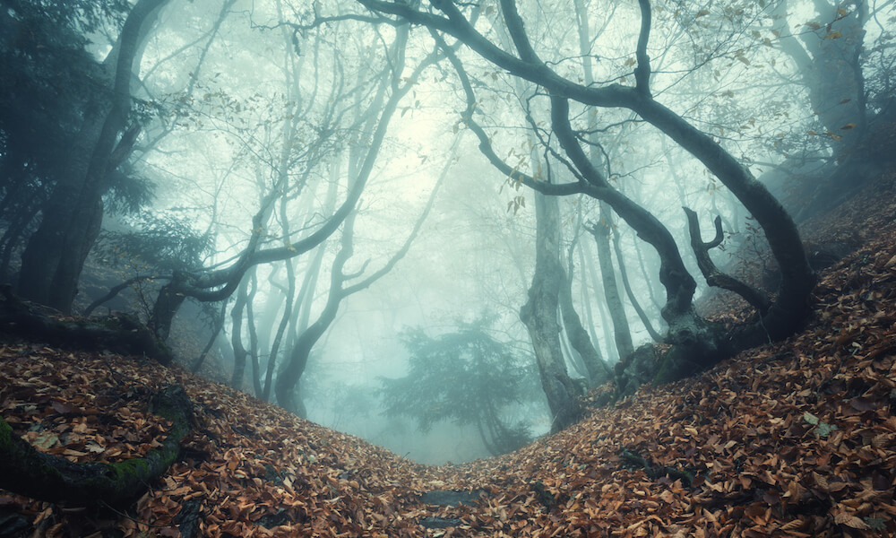 Trail through a mysterious dark old forest in fog
