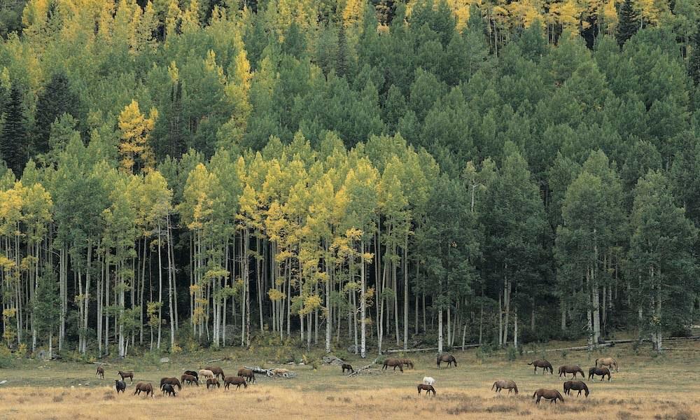 Colorado forest