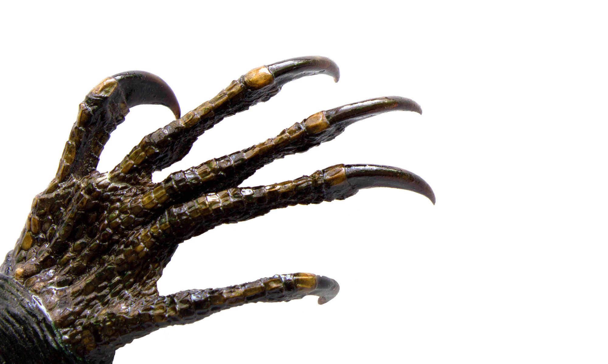 a monster's claw with long sharp nails