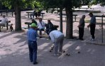 Europe, France, Provence, French, Mediterranean, travel, petanque, boules, games, playing, balls, tradition, traditional, trees, Adults, Men, Groups, Older People, People