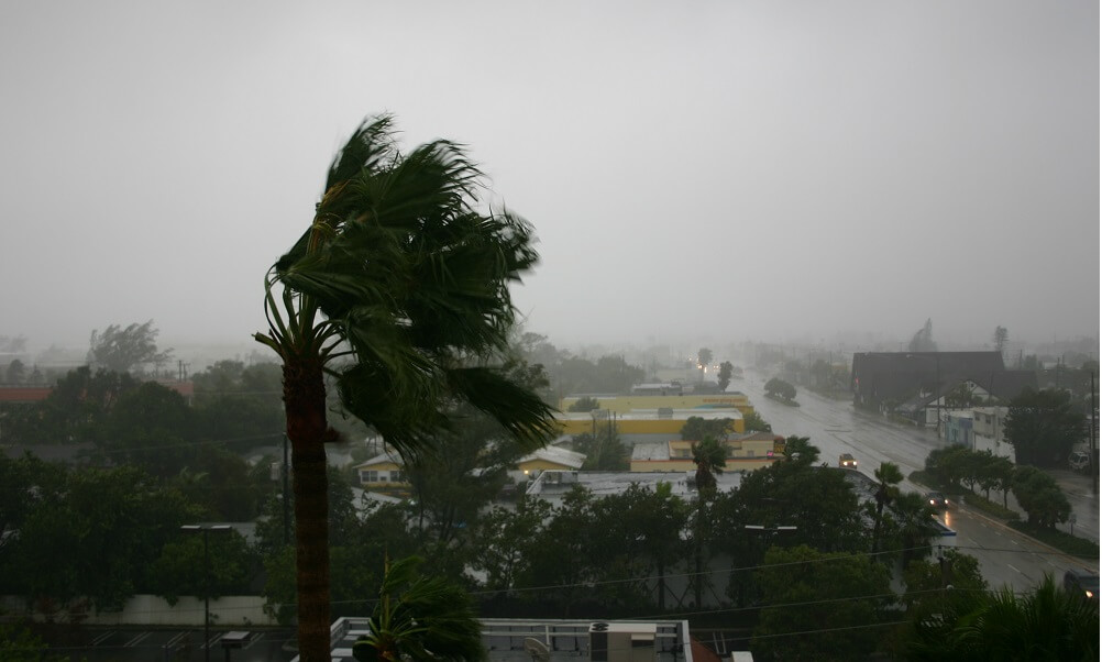 Wind blowing palm tree during Hurricane Katrina