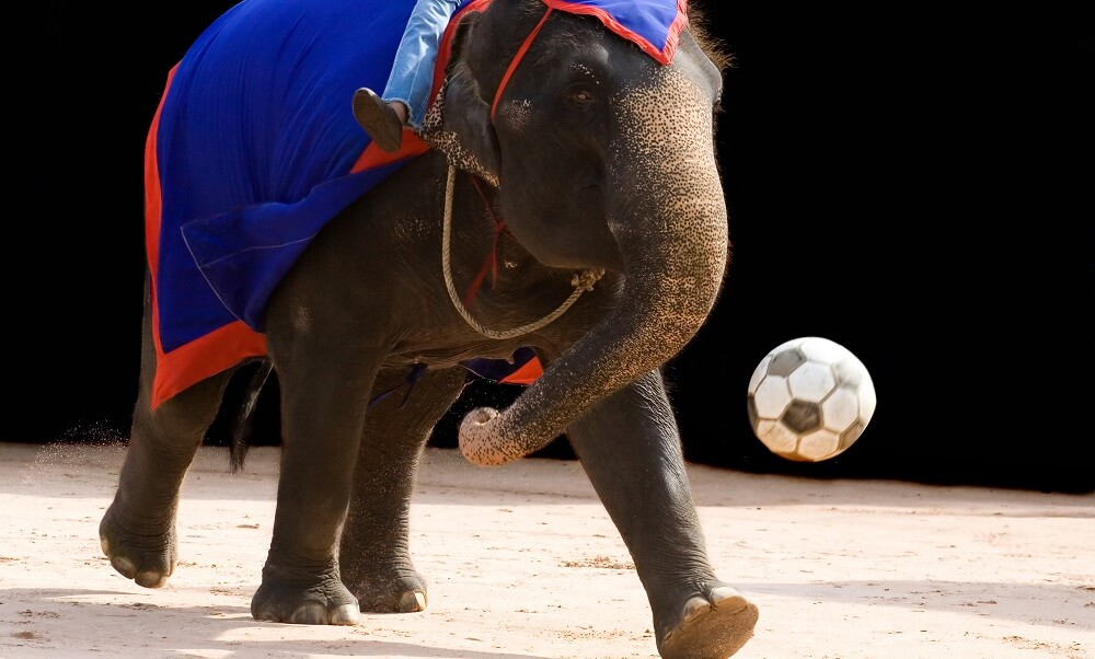Elephant playing