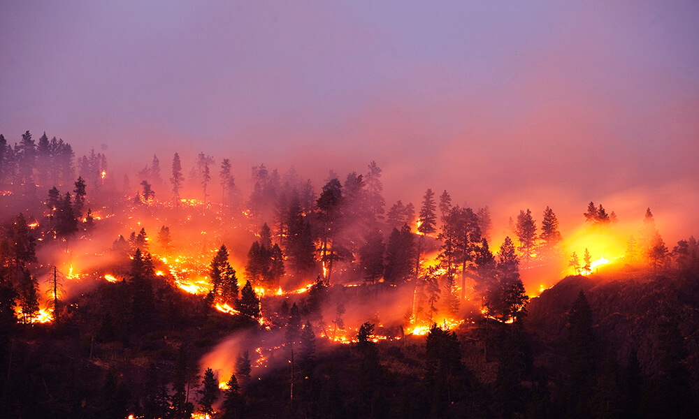 Forest fire burning on side of mountain in Montana