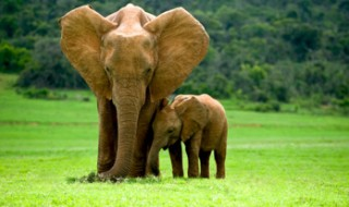 An elephant mother and her tiny calf standing close together in a grassy field.