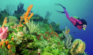 A scuba diver in a pink wetsuit swimming over a coral reef full of colorful corals of all shapes and sizes.