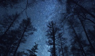 A night sky showing the many stars of the Milky Way, with trees in the foreground.