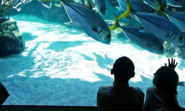 Two kids watching a group of large fish swimming in a huge aquarium tank.