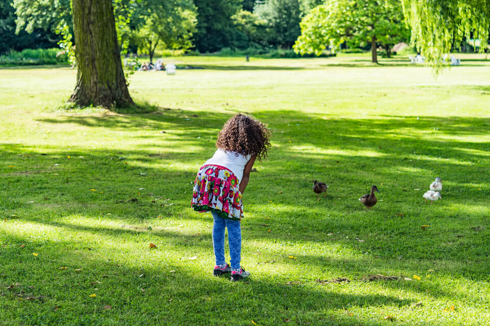 girl talking to ducks on a green meadow. Child looking at ducks and ducklings eating grass on sunny day in a city park.