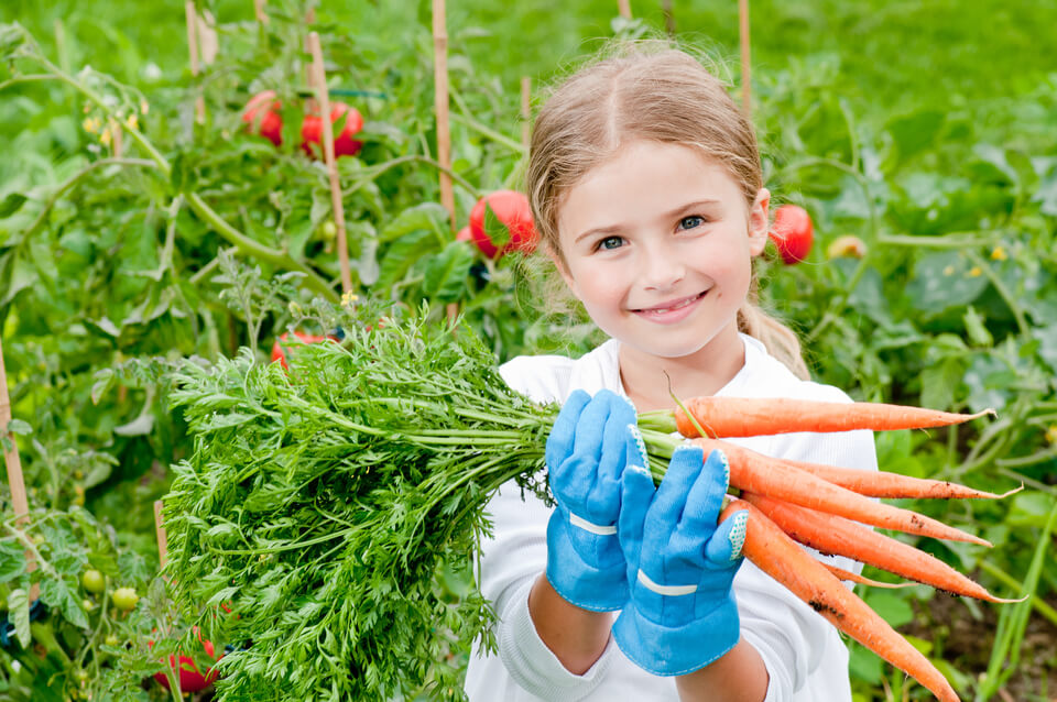 Little girl with bunch of carrots in vegetable garden