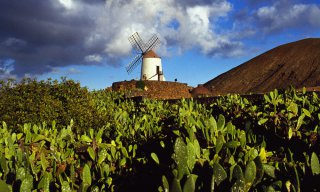 Typical windmill, Guatiza, Lanzarote, Canary Islands, Spain