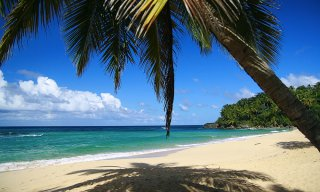 Calm caribbean beach with palm tree