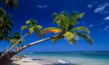 Palm trees on tropical coastline, Las Terrenas, Samana Peninsula, Dominican Republic