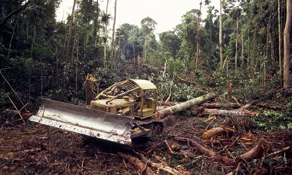 Bulldozer logging in rainforest