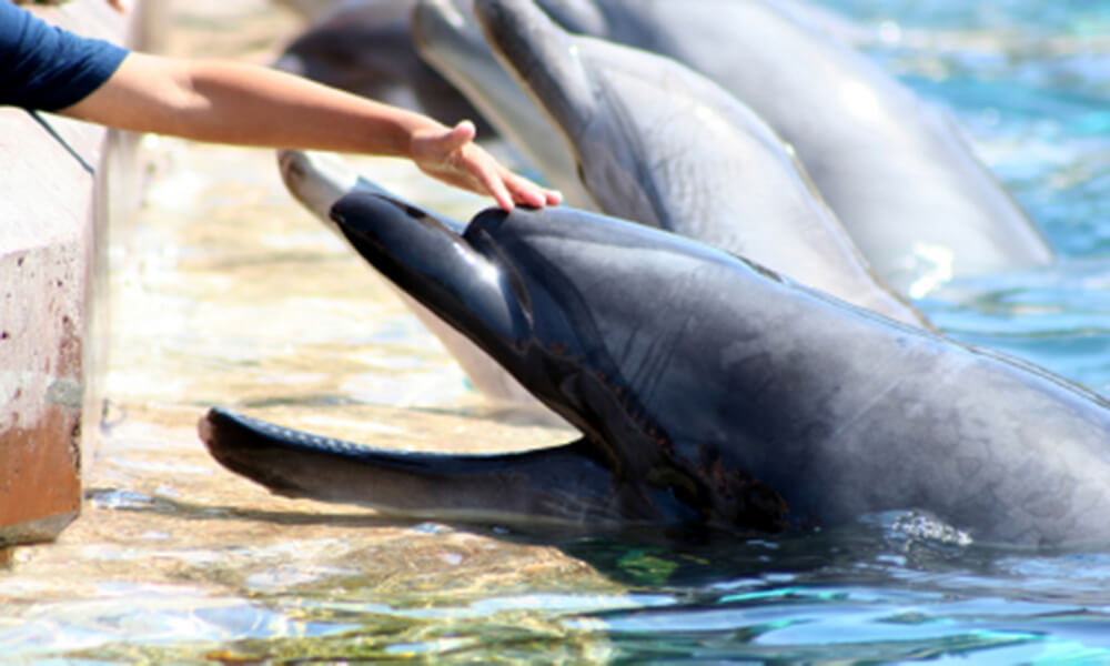Boy reaches out and pets the head of a smiling Atlantic bottlenose dolphin at a marine park